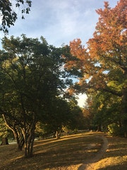 Photo of Prospect Park