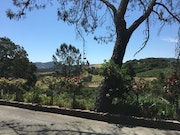 Photo of The Kuleto Estate Winery
