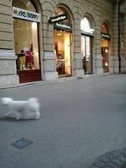 Photo of Ermenegildo Zegna Boutique