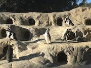 Photo of San Francisco Zoo